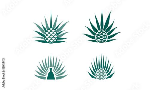 Photo agave plant logo