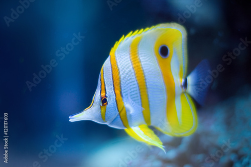 Fotomural Tropical Fish