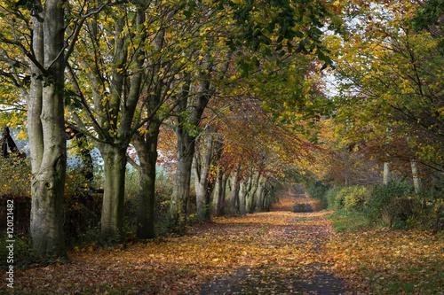 Aluminium Prints Autumn Autumn Road
