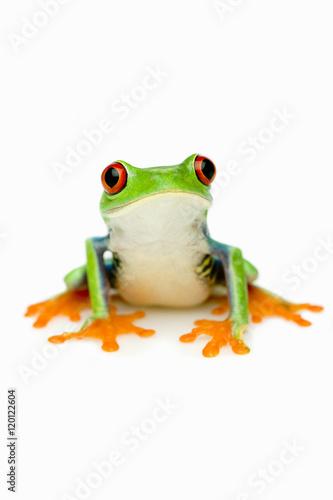 Tuinposter Kikker Green Frog Portrait