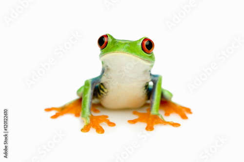 Photo sur Aluminium Grenouille Green Frog Portrait