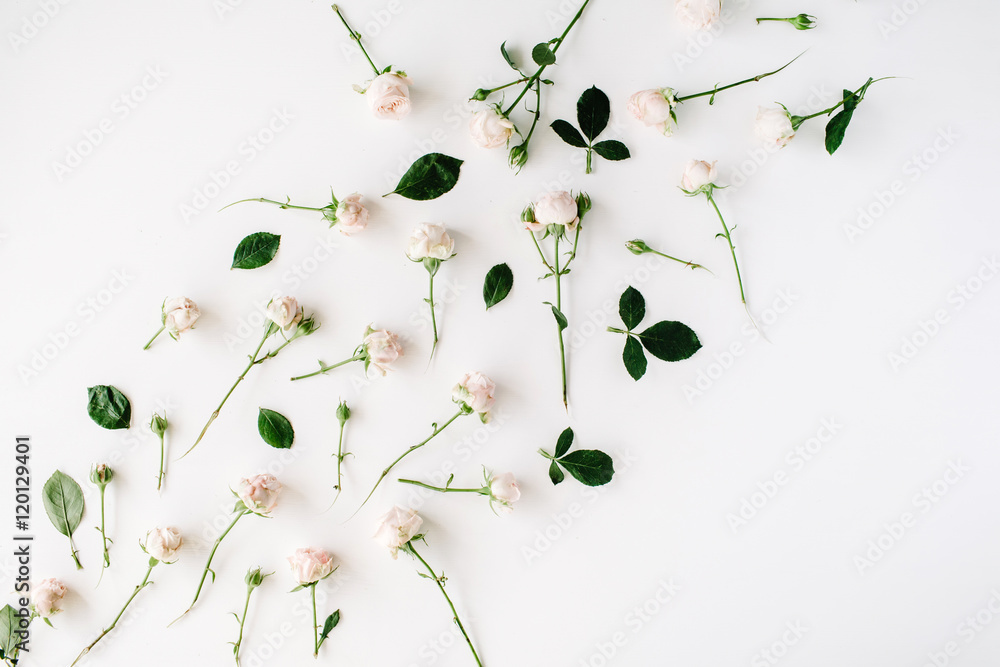 Fototapety, obrazy: Roses on white background. Flat lay, top view