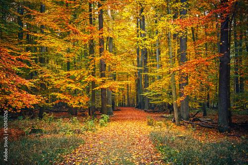 Foto op Canvas Weg in bos Pathway in the autumn park