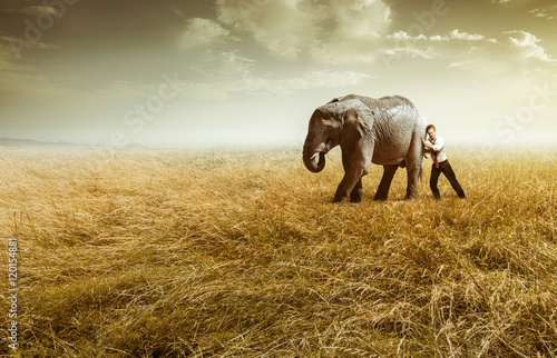 Canvastavla Elefant auf dem Feld