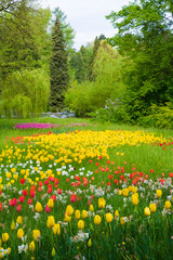 FototapetaMany different tulips in the spring park of Mainau island