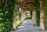 Prospective of ivy tunnel