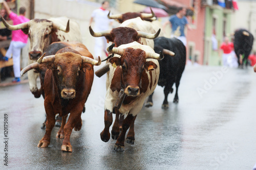 Bulls and people are running in street