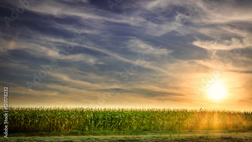 Foto Cornfield in the summer
