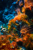 Fototapeta Fototapety do akwarium - Podwodny tropikalny świat w niezwykłych kolorach