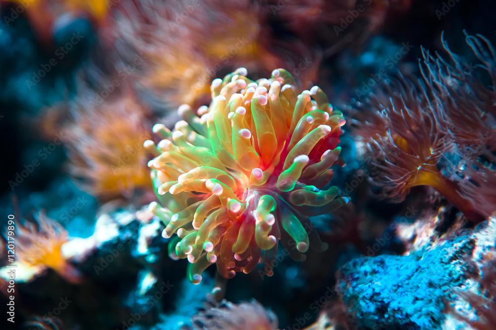 Fototapeta Podwodny tropikalny świat w niezwykłych kolorach
