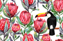 Hand-drawn Watercolor Seamless Tropical Pattern With Red Protea Flowers And Big Black Toucan Bird. Colorful Exotic Summer Print With Floral Elements For The Textile And Wallpapers.