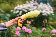Garden Pitate Holding A Zucchini Gun