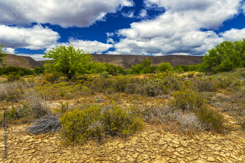 Foto op Canvas Zuid Afrika Republic of South Africa - Western Cape province. Little Karoo or Klein Karoo (semidesert natural region) near Route 62. Typical for Little Karoo landscape and xerophytic plants