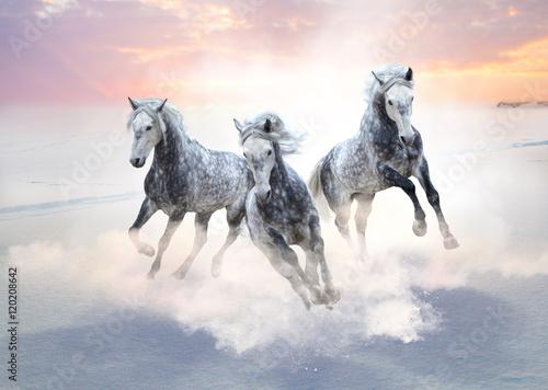 trzy-szare-konie-biegna-do-przodu-na-polu-sniegu-na-tle-wschodu-slonca