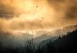 Zugvögel zur goldenen Stunde vor einer Nebel und Wolken wand
