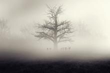 Dark Horror Forest  Gravestone Background.