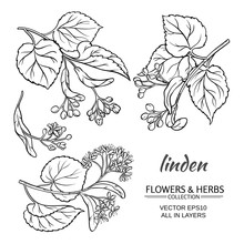 Linden Vector Set