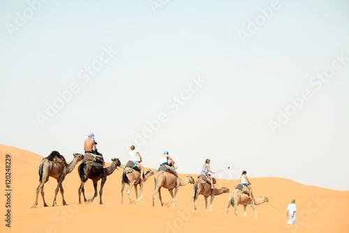 Poster de jardin Vache Caravana de Camelos