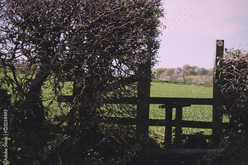 Fotografie, Obraz  Wooden country stile in a hedge leading to field Vintage Retro F