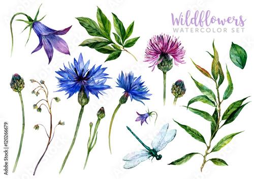 Fototapeta Hand drawn watercolor wildflowers obraz