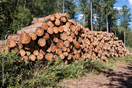 In de dag Brandhout textuur Lumber wood