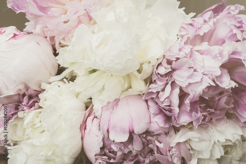 Vintage koncepcja z piwonie. Filtrujący wizerunek z pastelowymi barwionymi kwiatami w retro stylu.