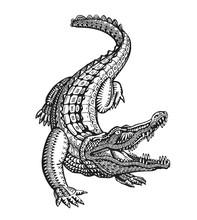 Crocodile, Alligator Or Animal...