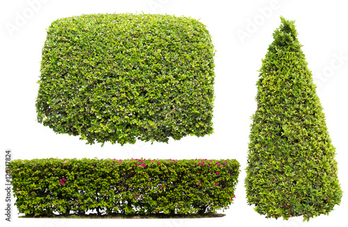 bush on white background Wallpaper Mural