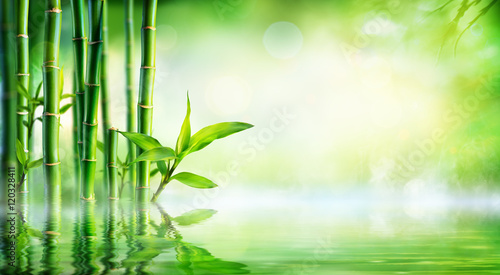 Poster Bamboe Bamboo Background - Lush Foliage With Reflection In The Water