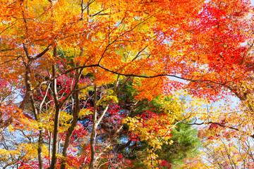 FototapetaFarbenfroher Herbstwald