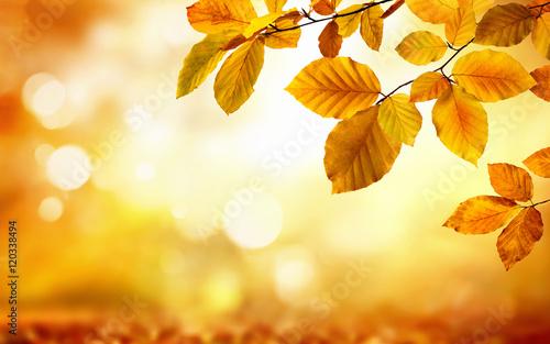 Photo  Gelbe Blätter im Herbst verzieren einen unscharf leuchtenden Hintergrund in der