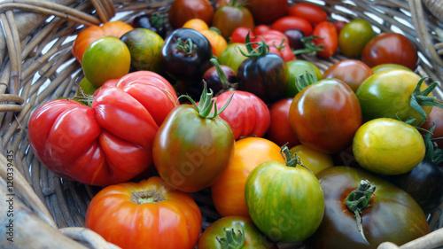 Panier de tomates anciennes