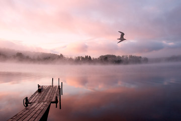 Fototapeta Morning on the Seliger lake (Russia) with mist (fog) and gull flying over the frame