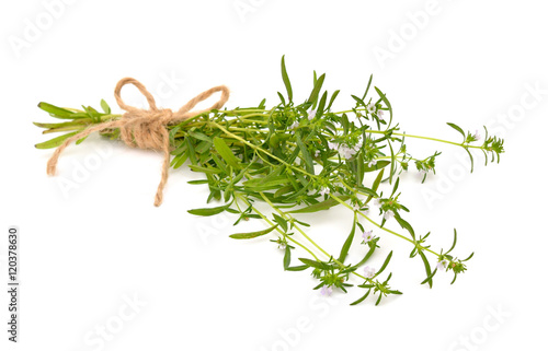 Summer savory isolated