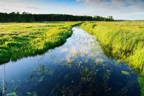 Fotografija  Summer landscape with Jegrznia river and marsh vegetation in the vicinity of Biebrza National Park