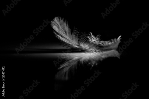 obraz lub plakat Reflection of feather on a black background
