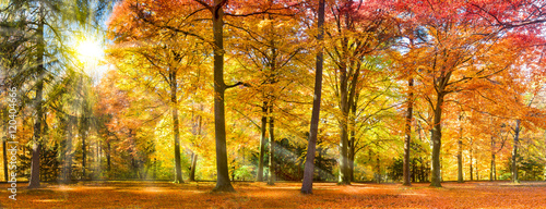 Canvas Prints Honey Bunter Herbstwald im Sonnenlicht