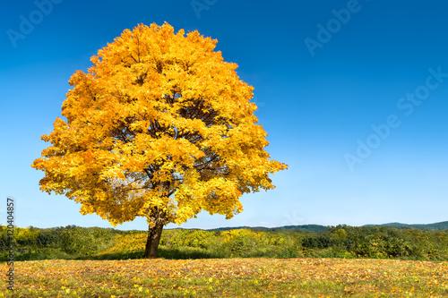 Foto op Aluminium Oranje Herbstlandschaft mit Baum