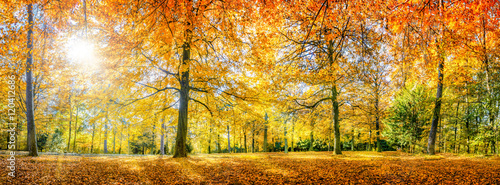Canvas Prints Honey Herbstwald Panorama im Sonnenlicht