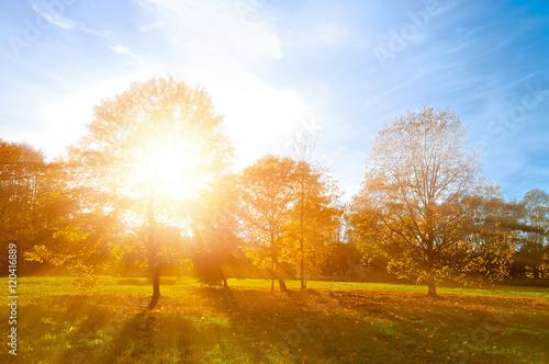 Fotografiet  Autumn landscape -yellowed autumn park in autumn sunny evening