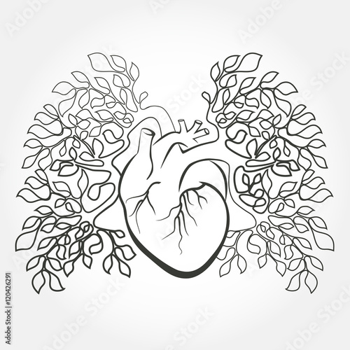 Human heart and lungs like a tree branch. Anatomy art design vector ...
