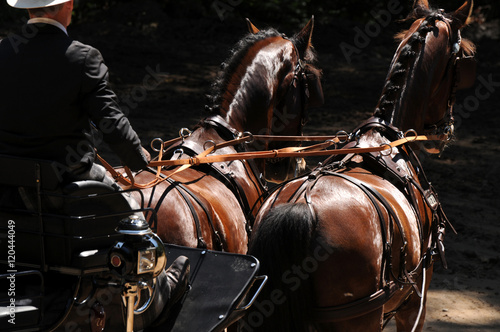 La pose en embrasure Equitation Fahrsport