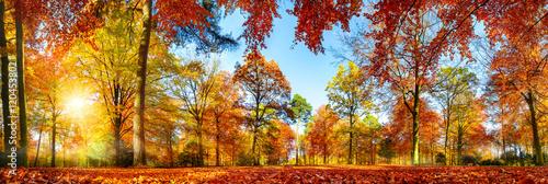 Poster  Panorama von bunten Bäumen bei strahlendem Sonnenschein im Herbst