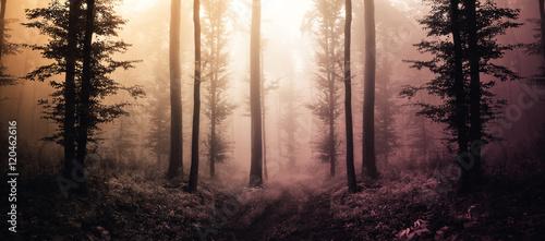 Fototapeten Wald fantasy forest landscape