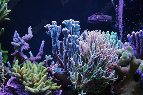 Poster Violet Dominated SPS coral reef tank aquarium