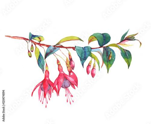 Slika na platnu Hand-drawn watercolor floral illustration of the colorful vibrant pink fuchsia branch