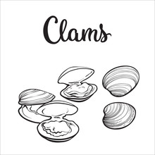 Clams, Mussels, Seafood, Sketc...