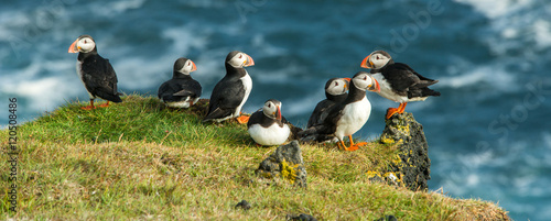 Puffin, Heimaey coast, South Iceland Tablou Canvas