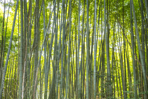 Foto op Plexiglas Bamboe The bamboo forest