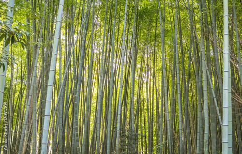 Foto op Plexiglas Bamboe A bamboo forest